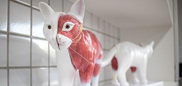 Inaugurado novo Laboratório de Anatomia Animal